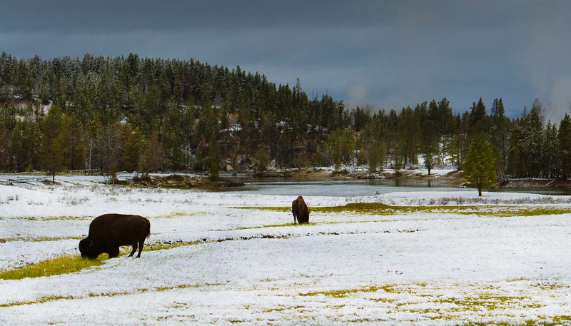 Hayden Valley in the Snow, Yellowstone National Park