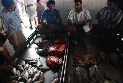 Ready to do business. The fish market at Al Hodaidah.