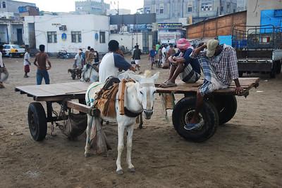 Donkey carts at Al Hodaidah.