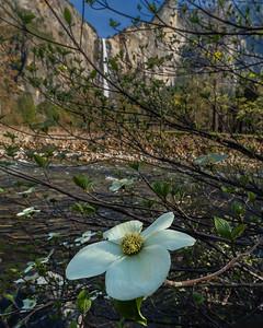 Yosemite  May 4 2018