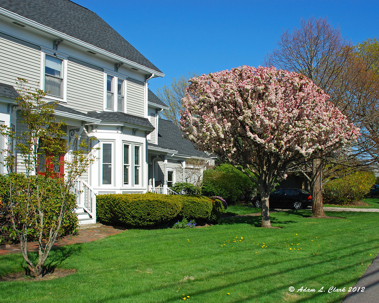 Tree in bloom at one of the houses near the beaches