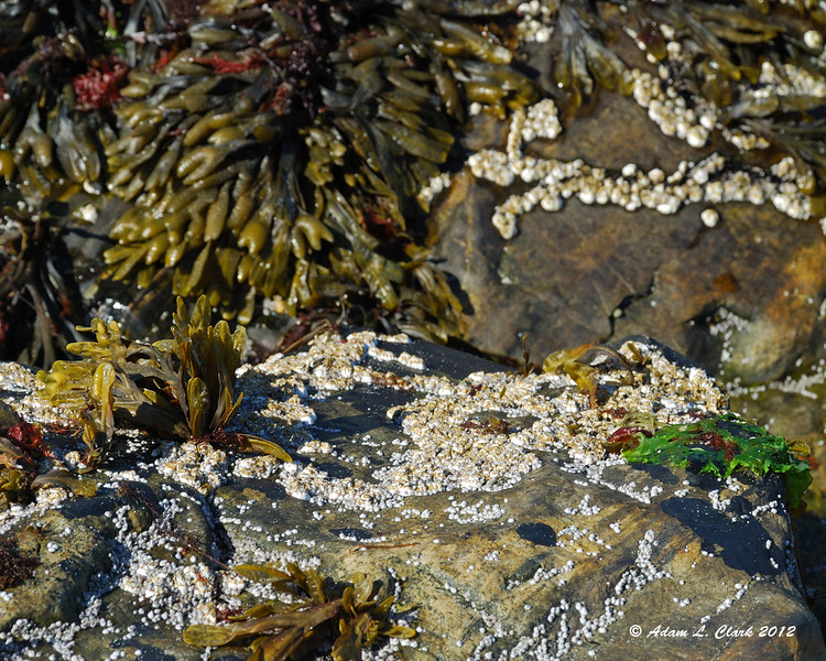 Seaweed and other things growing on the rocks