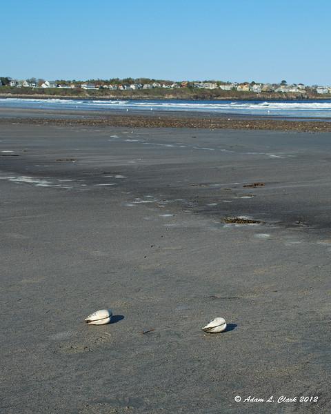 A couple shells on the beach