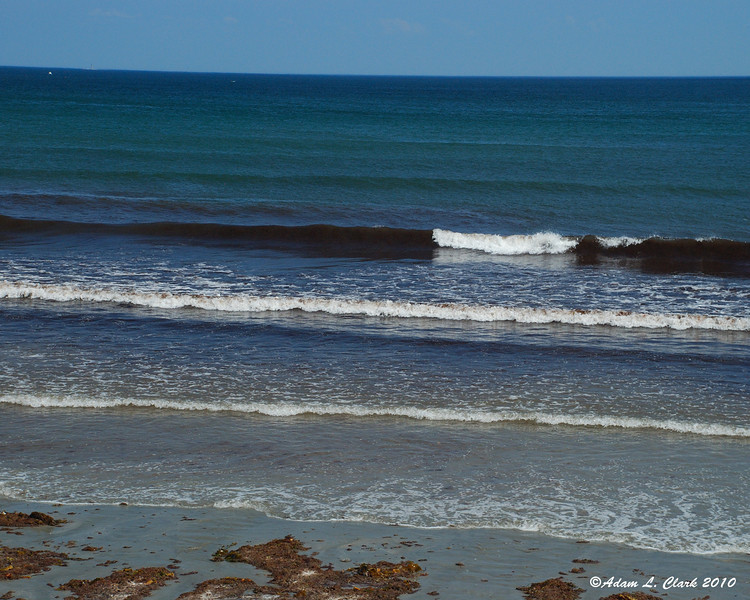With the way the currents were going, there was plenty of seaweed in the water at the Northern end of the beach