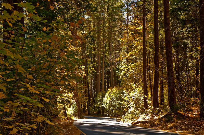 Two-way road between Yosemite Falls and Camp 4 (Sunnyside) campground