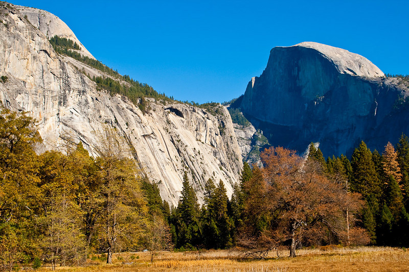A most photographed tree standing in the meadow just north of Sentinel Bridge. North Dome (at upper left) and Half Dome.