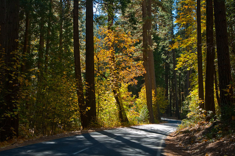 Two-way road between Yosemite Falls and Camp 4 (Sunnyside) campground