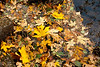 Just a bunch of leaves at water's edge. Between Fern Springs (near Pohono Bridge & Valley View) and Bridalveil Meadow.