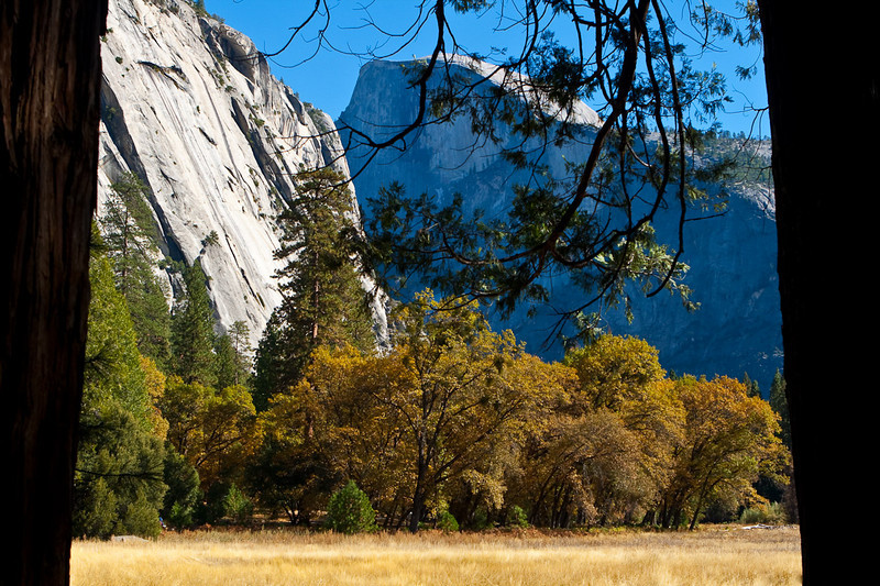 Half Dome, from the meadow between Yosemite Village & the Ahwahnee Hotel. Some lucky employees get this view out their back door.
