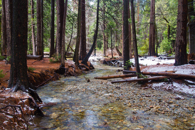 Stream in the woods - Yosemite