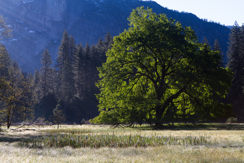 Early Morninh light - Yosemite