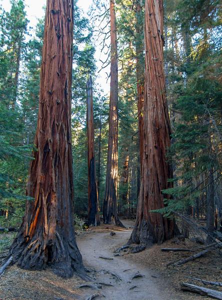 Big trees...tough to explain how tall those are