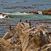 A Scene from 17 Mile Drive