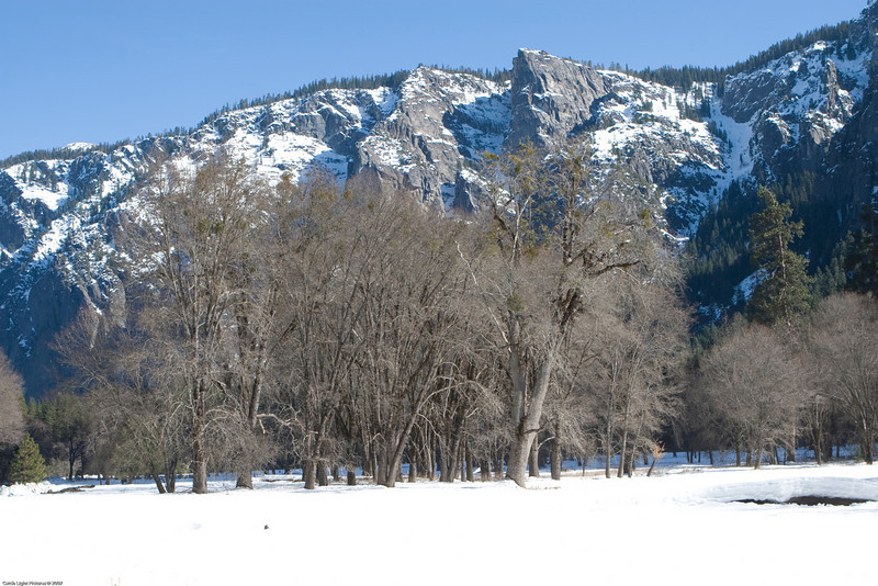<h3>Trees in Snowy Meadow</h3>This is one of the many meadows in the Yosemite valley that is now covered with snow.
