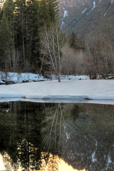 <h3>Winter Tree on The Merced River</h3>This is the Merced River in Yosemite Valley.  I took this picture near sunset.  I was trying to insure that I got the reflection of the tree in the water.<br>