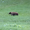 Craig shot this bear (with his camera)
