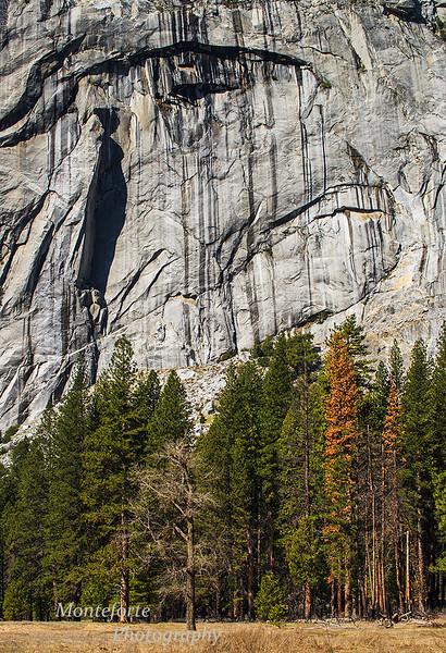 Piranha On Rock Wall Yosemite National Park CA