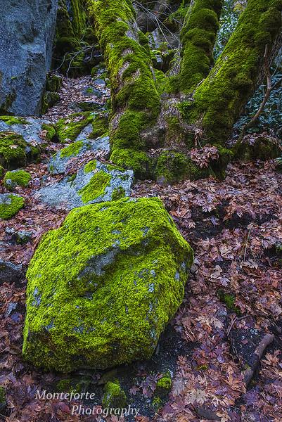 Trail to mirror lake Yosemite NP Ca