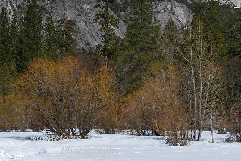 Yosemite in winter along the Merced River.