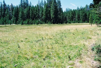 8/17/04 White Wolf Lodge & Campground (meadow area), Yosemite National Park