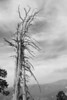 Yosemite National Park. These dead trees on Sentinel Dome just begged to be shot in B&W.<br /> <br /> Photo by Dennis