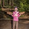 Sugar pine (Pinus lambertiana) cones - the longest cones produced by any conifer. Tuolumne Grove, Yosemite National Park, CA.