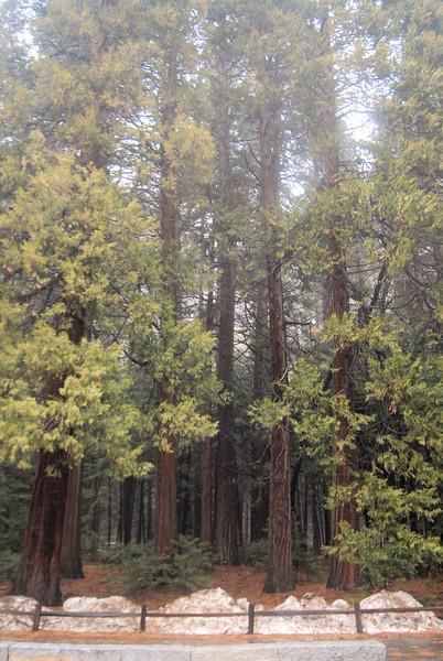 Yosemite_45