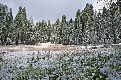 Crescent Meadow, Sequoia National Park, California