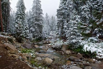 Near Tokopah Falls Trail, Sequoia National Park, California