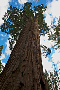 Faithful Couple, Sequoia National Park, California