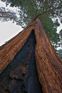 Fire Scar, Sequoia National Park, California