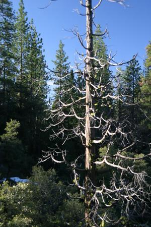 Dead tree #73.