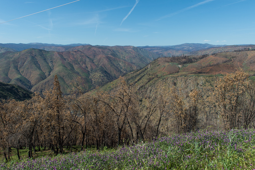 This is the valley that the rim fire hit hardest...miles and miles of totally burned out forest.