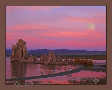Full Moon Over Mono Lake ~ After the sun set, the colors deepened and became wonderful oranges and pinks.  Seeing the full moon hovering in the colorful sky, was a magical moment.  The California Gulls bathed in all that glorious color.