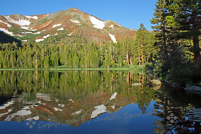 Virginia Lakes ~ This beautiful spot was just a few (steep) miles off Hwy 395, a little north of Lee Vining.  We saw Cassin's Finches and Gray-crowned Rosy Finches at the feeders, as well as many Belding Ground Squirrels.  This photograph was at about 6:30 am, with the lake mirror-like.  A Northern Goshawk flew through the forest here.