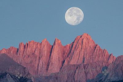 Mount Whitney at Sunrise/Moonset ~ After getting rained out at the Bristlecone Pines, I escaped to the Alabama Hills, out of Lone Pine, California.  The sharp Sierra peaks oversee this area.  At dawn, before the sun actually rises above the eastern mountains, the higher peaks in the west take on this rosy glow from the coming sun. This almost-full moon was setting above these peaks.