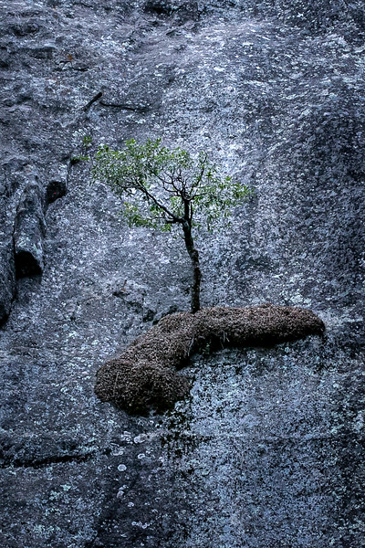 Tree on Cliff Face