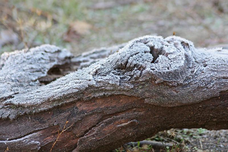Rimy log