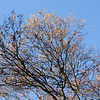 Winter trees by Ahwahnee