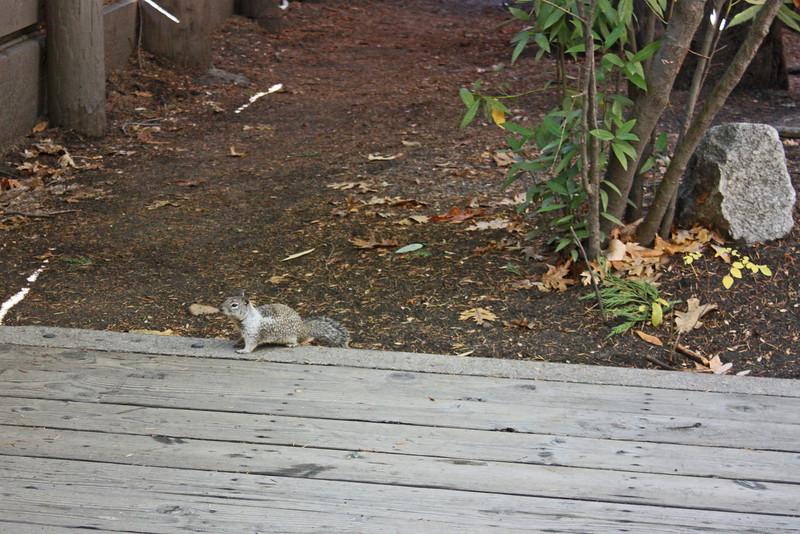 Squirrel by parking lot