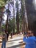 Duncan Davidson<br /> Yosemite - 2016-03-16 at 14-29-35