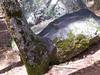 Tree merging to rock<br /> Yosemite - 2016-03-16 at 14-02-57