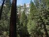 Yosemite - 2016-03-16 at 13-21-27