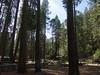 Yosemite - 2016-03-16 at 13-22-57