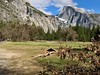Half Dome abobe Cook Meadow