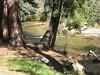 A small fall on Tenaya Creek