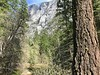 Half Dome from Tenaya Creek