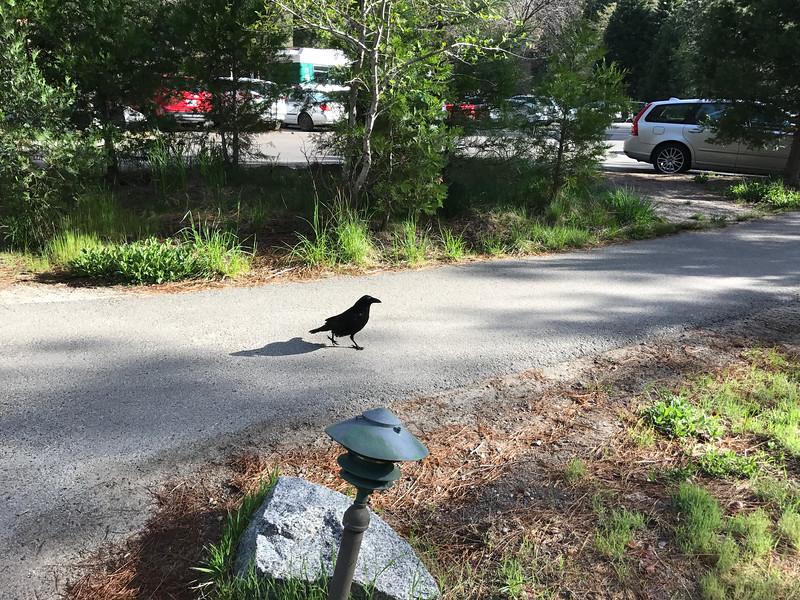 Yosemite Lodge Resident