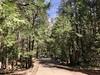 Trail below the Fall