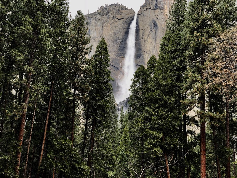 Upper Yosemite Falls from the Falls Trailhead Area